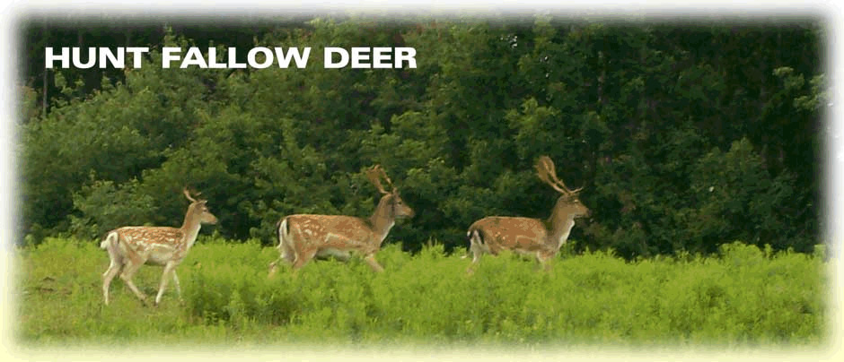 Hunt Fallow Deer in Upsate New York